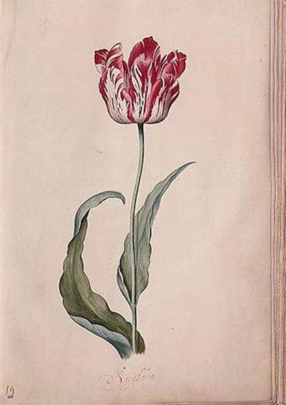 judith-leyster-tulip-book